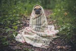 Tips for Making a Snuggly Home During Winter