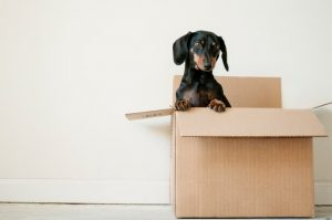 How To Avoid Further Aggravating an Injury During Your Move